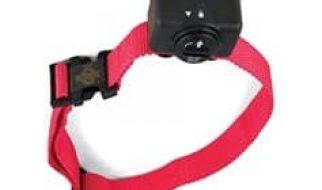 Guide d'achat d'un collier anti-aboiement photo 3