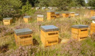 Ruche pour abeille, les meilleurs modèles photo 3